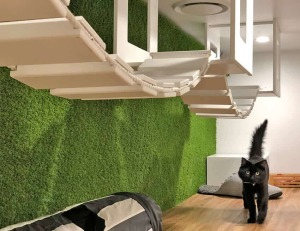 cattery play room